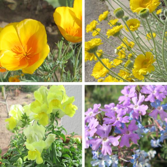 Lookin' Fly - Spring Flowers